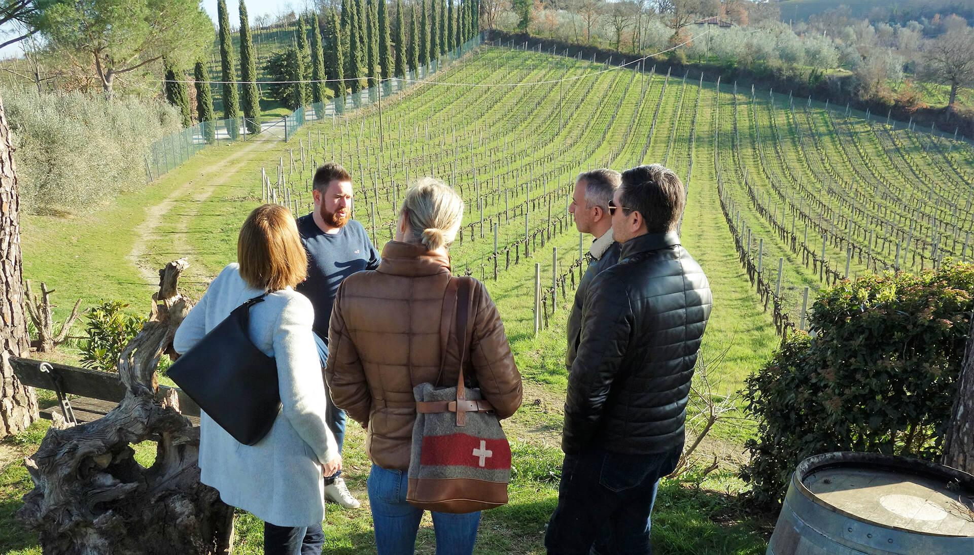 The Vernaccia di San Gimignano: a DOCG white wine